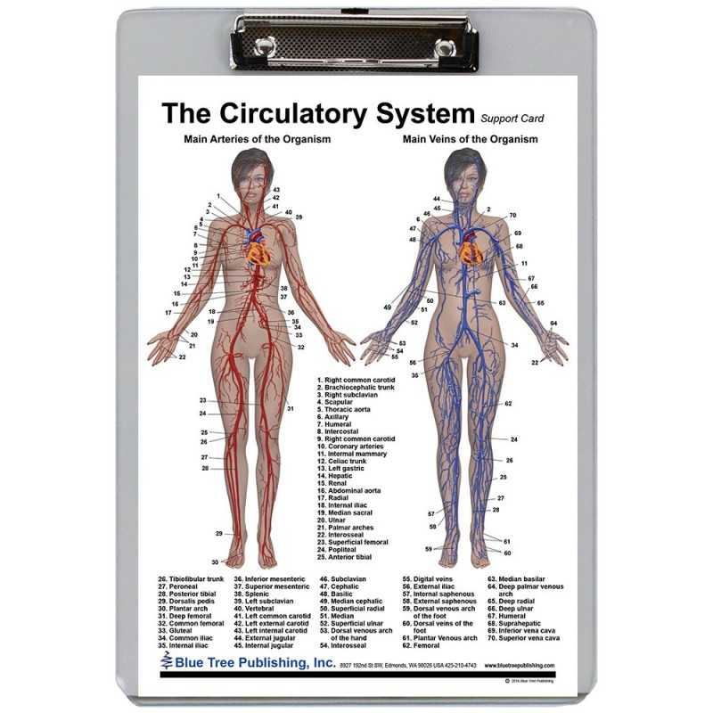 Circulatory System Dry Erase Clipboard front