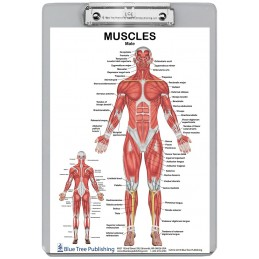 Muscle Anatomy for Female and Male 2 Dry Erase Clipboard back