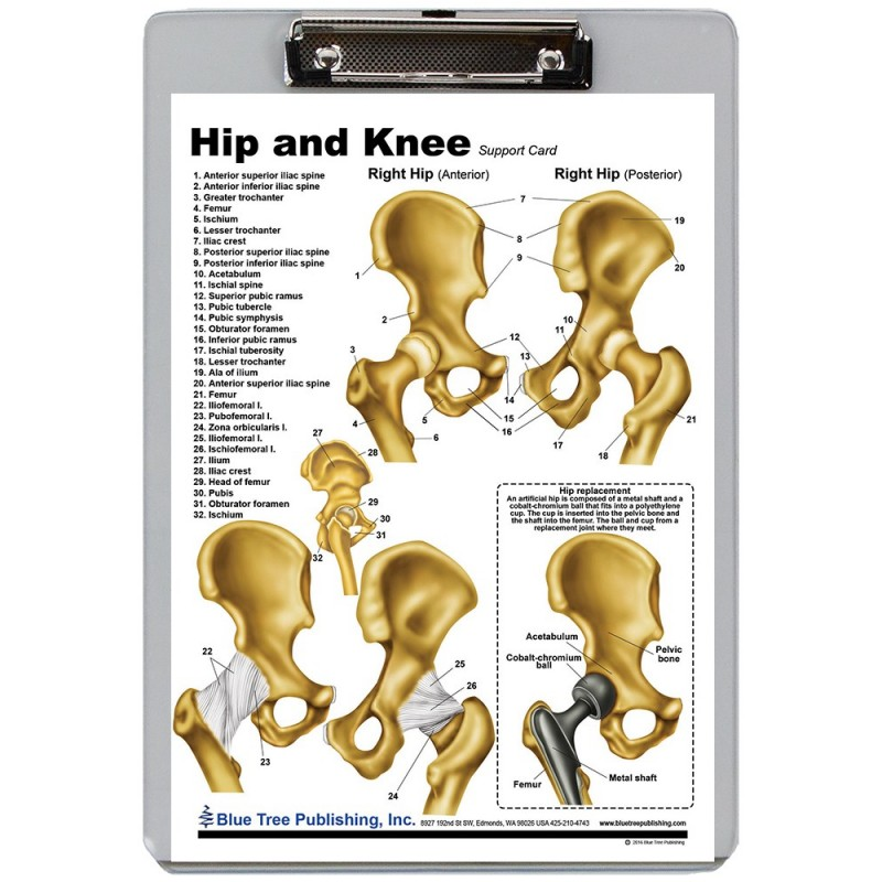 Hip and Knee Dry Erase Clipboard front