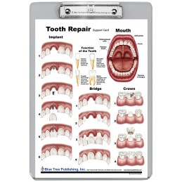 Tooth Repair Dry Erase Clipboard back