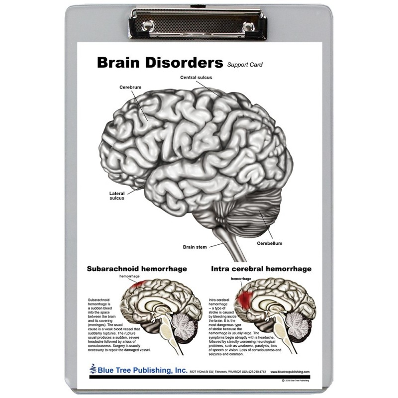Brain Disorders Dry Erase Clipboard front