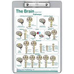 Brain Cranial Nerves Pathways Dry Erase Clipboard back