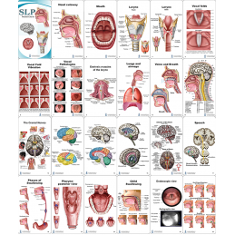 SLP Anatomy Pocket Charts contents