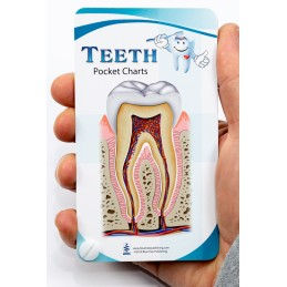 Teeth Anatomy Pocket Charts