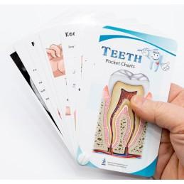 Teeth Anatomy Pocket Charts
