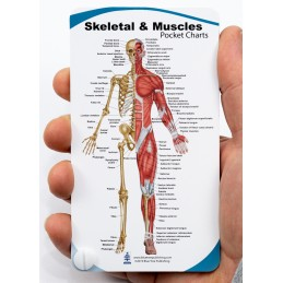 Skeletal & Muscles Anatomy Pocket Charts