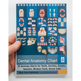 Dental Anatomy Flip Charts