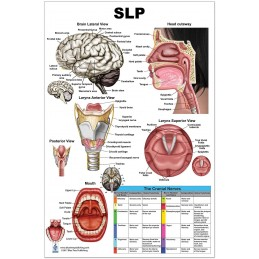 SLP Regular Poster
