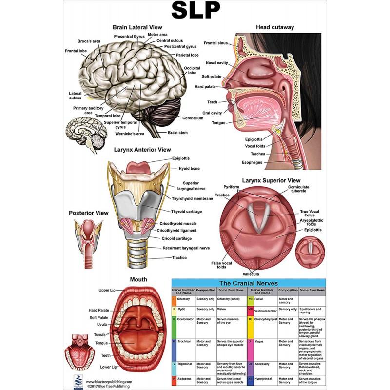 SLP Medium Poster