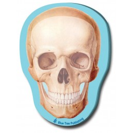 Skull Stick Note