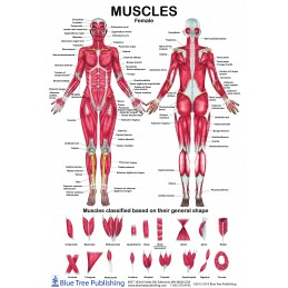 Female & Male Muscle...