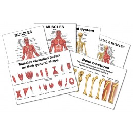 Muscles and Bones Mini Card Set