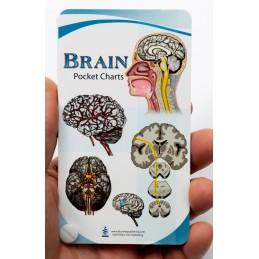 Brain Pocket Charts
