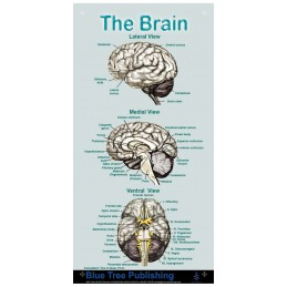Brain Mini Poster
