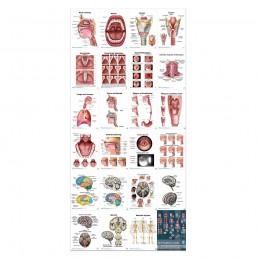 SLP Anatomy Flip Charts contents