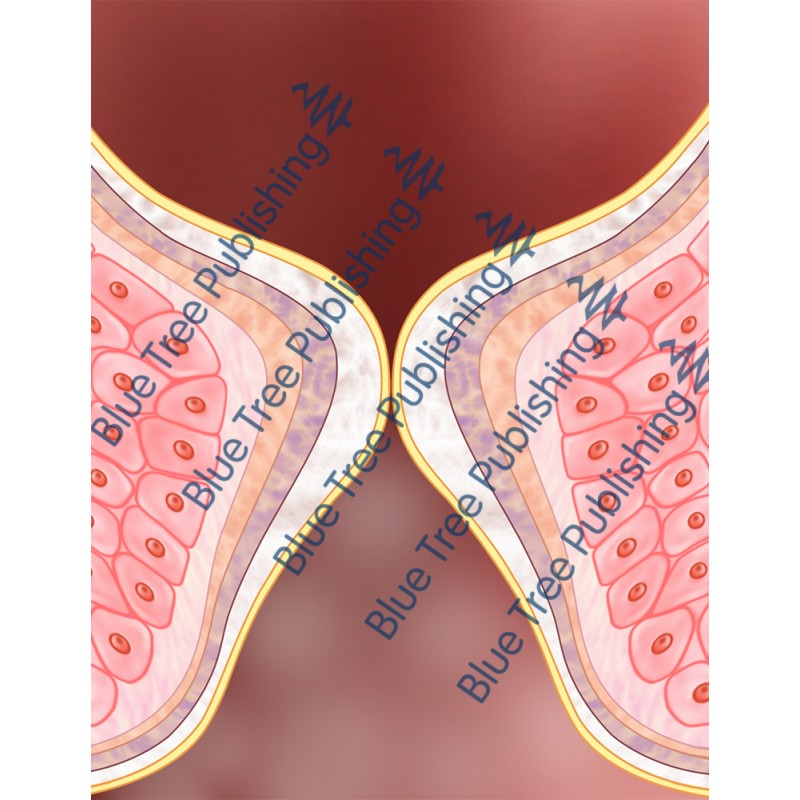 Vocal Folds Side Zoom View - Download Images
