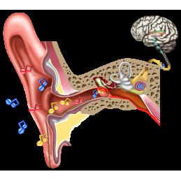 Hearing Eardrum Rupture - Download Image