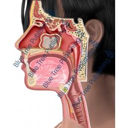 Sinus Side Abnormal  - Download Images