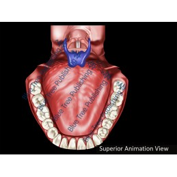 Swallowing Normal Superior Animation - Download Video