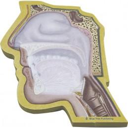 Head Cutaway Stick Note
