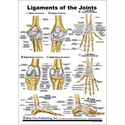 Ligaments of the Joints Anatomical Chart back