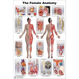 Female Anatomy Large Poster