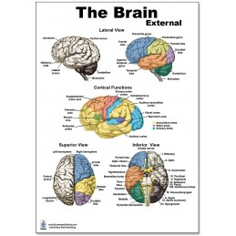 Brain External Regular Poster