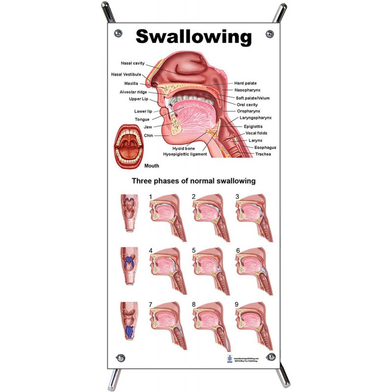 Swallowing Process Small Poster with stand