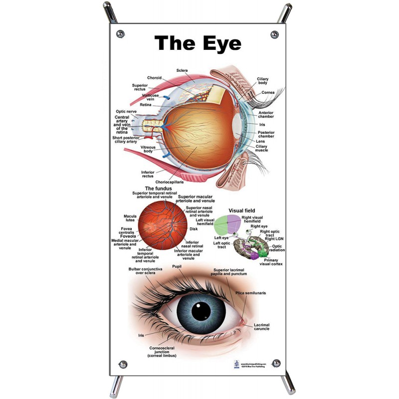 Eye Small Poster with stand