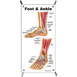 Foot and Ankle Small Poster with stand