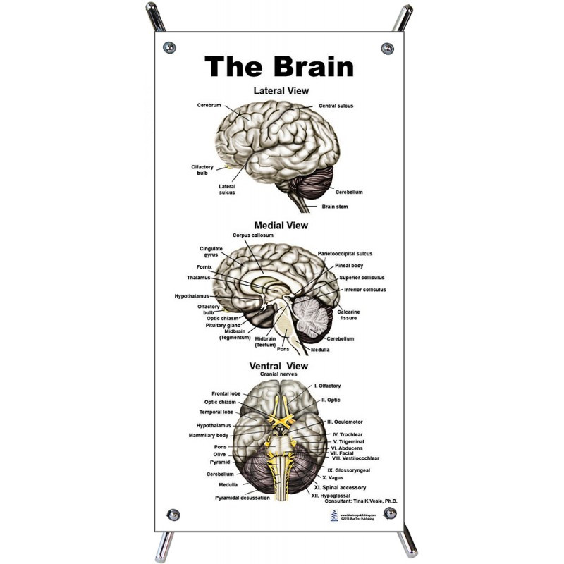Brain Black and White Small Poster with stand