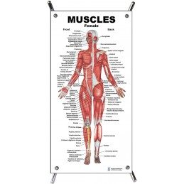 Muscles Female Small Poster with stand