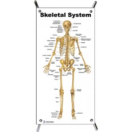 Skeletal System Small Poster with stand