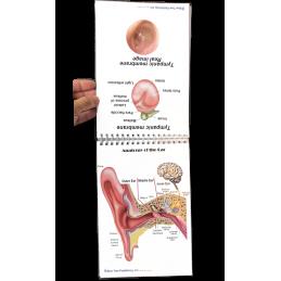 Ear Anatomy Flip Charts page view