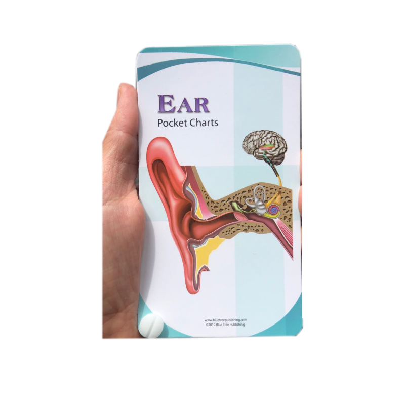 Ear Anatomy Pocket Charts