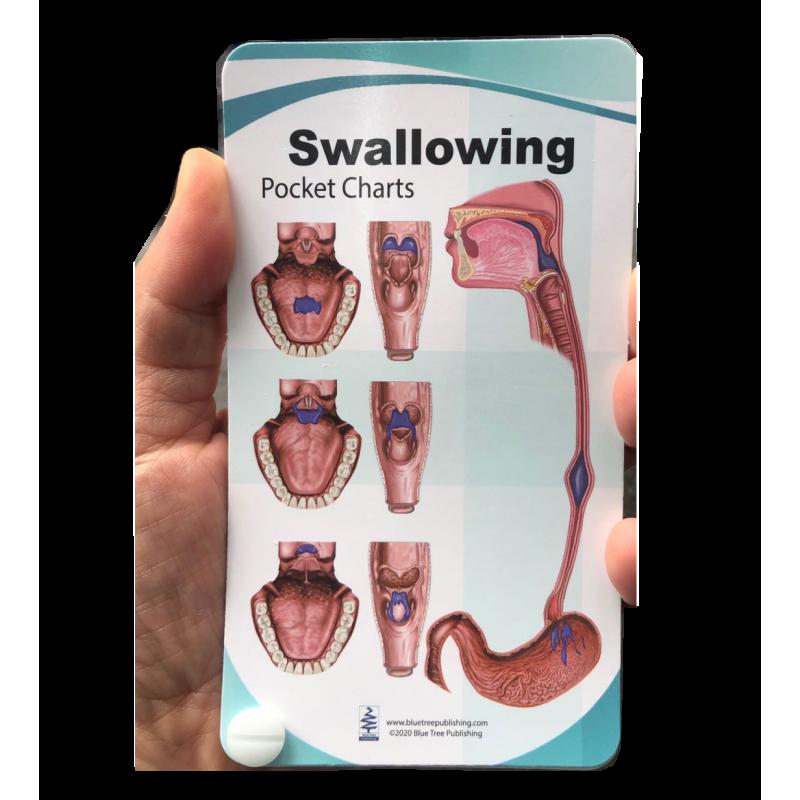 Swallowing Anatomy Pocket Charts