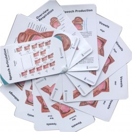 Speech Articulation Pocket Charts front