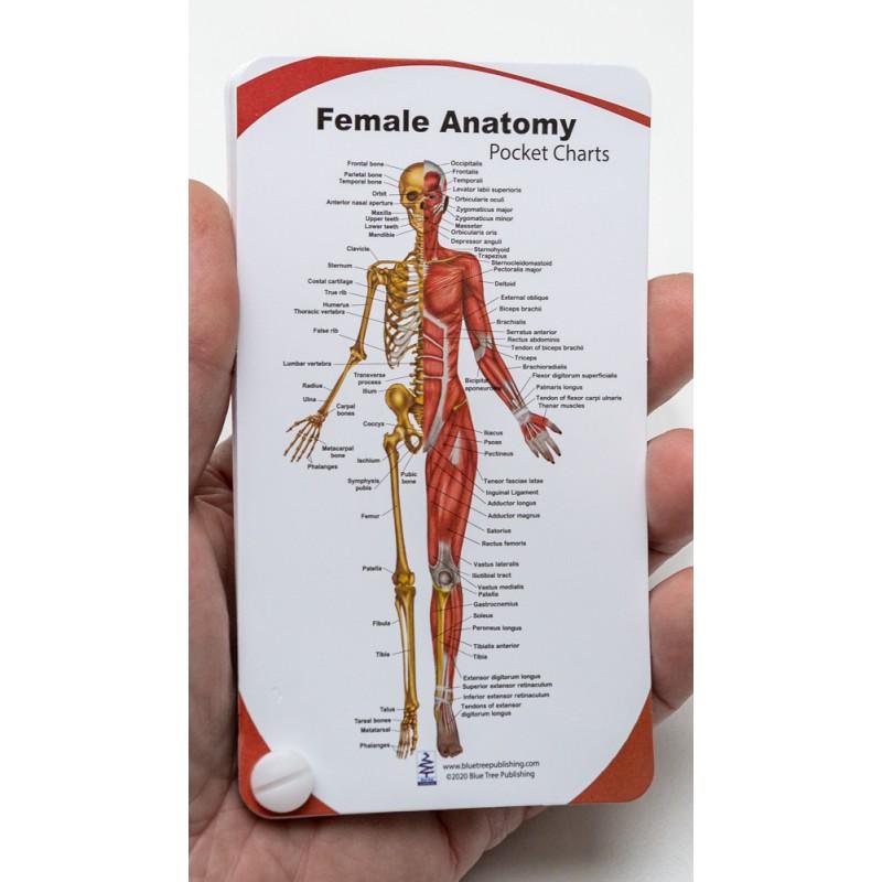 Female Anatomy Pocket Charts