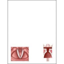 Vocal Fold Flip Note page 1