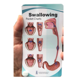 Swallowing Anatomy Pocket Chart