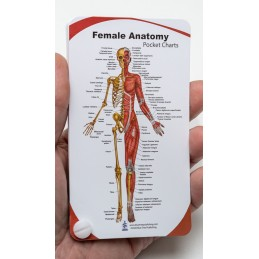 Female Anatomy Pocket Chart