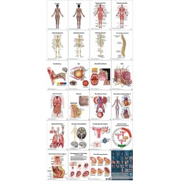 Female Anatomy Flip Chart all charts view