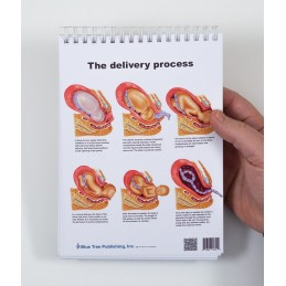 Female Anatomy Flip Chart delivery process