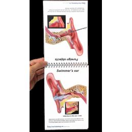 Ear Anatomy Flip Chart
