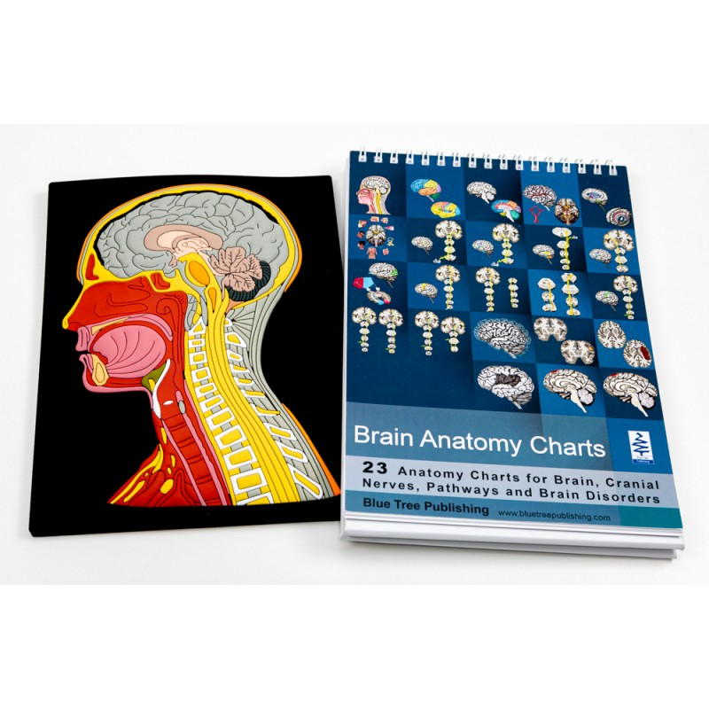 Brain Anatomy Flip Chart with Head and Neck Mat Model