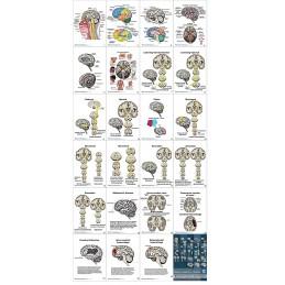 Brain Anatomy Flip Chart layout