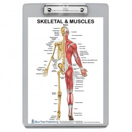 Muscle Anatomy and Skeletal Clipboard back