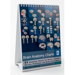 Brain Anatomy Flip Chart standing