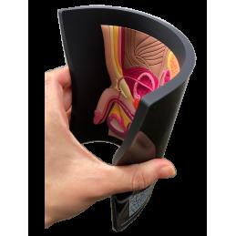 Male Pelvic Organ Mat Model flexible