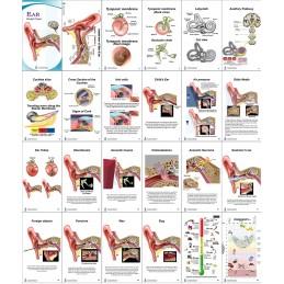 Ear Anatomy Pocket Charts layout